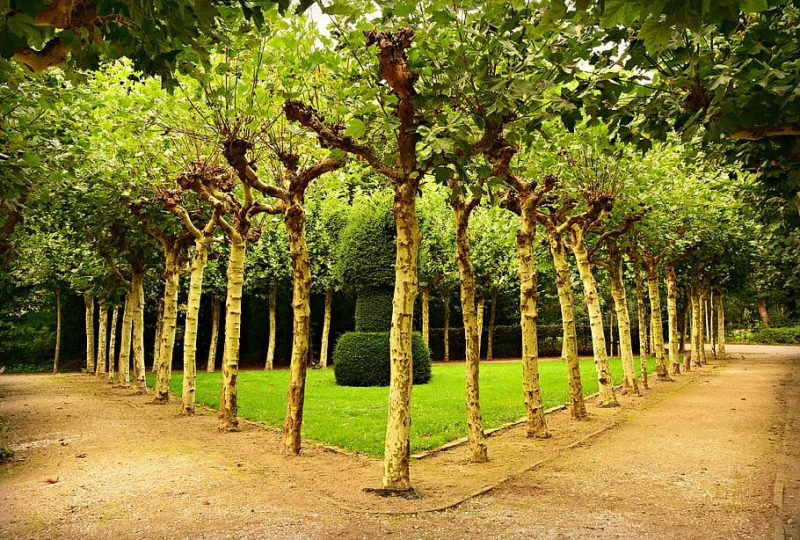 What Is the Purpose of Trimming Ornamental Trees?