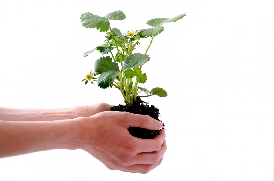 Soil: The Critical Element That Supports Plant Life